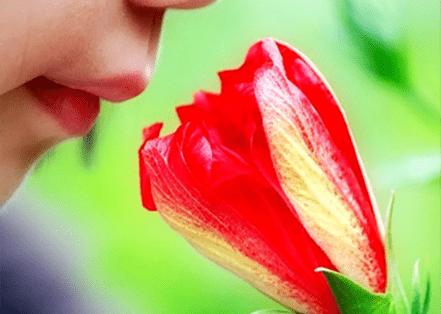 ¿Te encuentras en armonía con el ambiente y la rinitis alérgica?